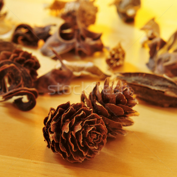 pine cones and dried flowers and leaves Stock photo © nito