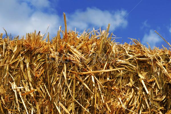 Stro baal vierkante hemel voedsel Stockfoto © nito