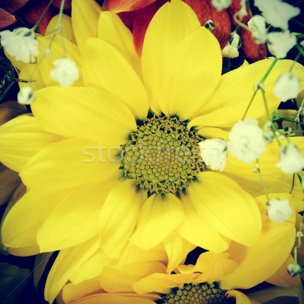 букет ретро эффект любви природы Сток-фото © nito