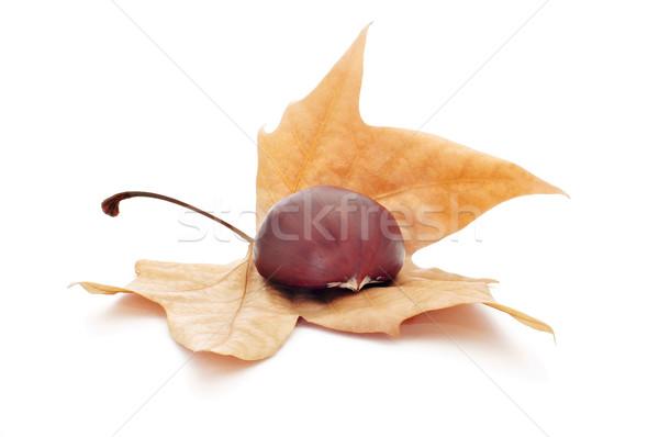 chestnut and autumn leaf Stock photo © nito