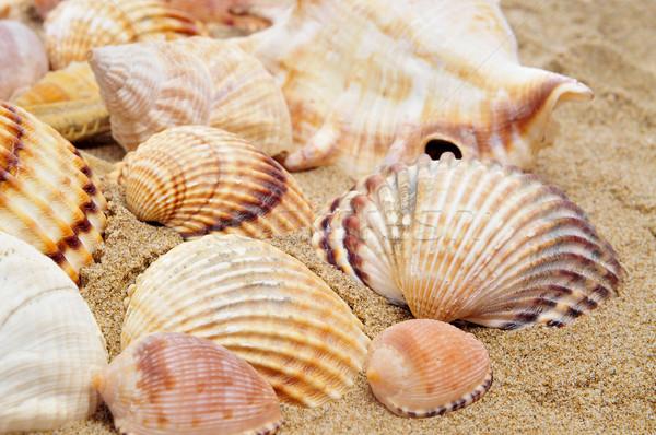 seashells Stock photo © nito