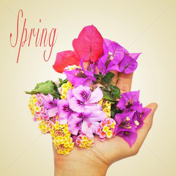 spring Stock photo © nito