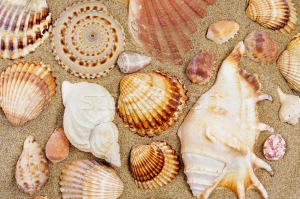 Conchiglie diverso forme dimensioni sabbia Foto d'archivio © nito