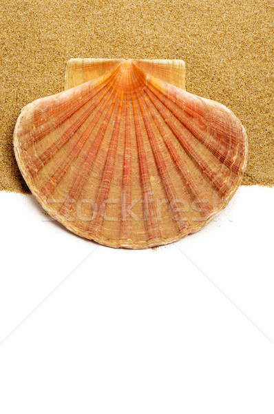 scallop shell on the sand Stock photo © nito