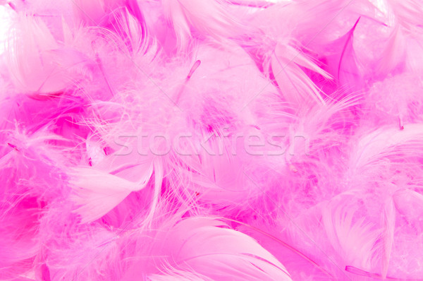 pink feathers Stock photo © nito
