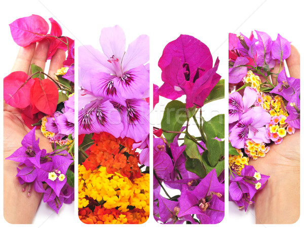 flowers collage Stock photo © nito