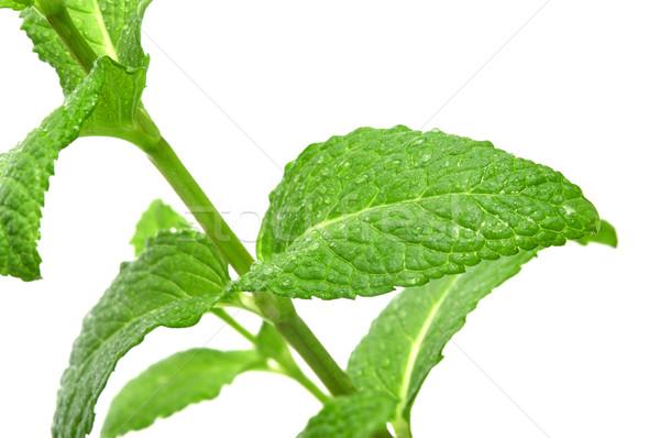 De planta branco comida verde Foto stock © nito