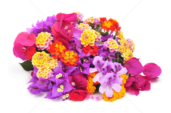 bunch of different flowers Stock photo © nito