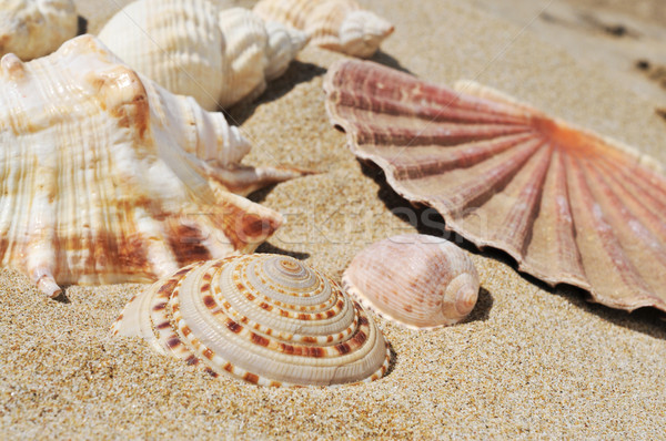 seashells on the sand of a beach Stock photo © nito