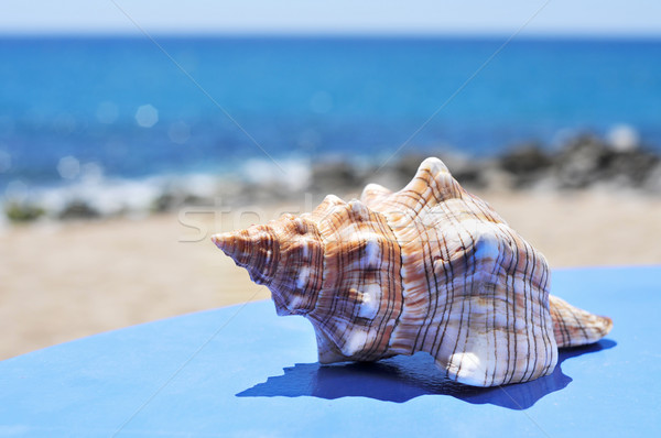 conch on a blue surface on the beach Stock photo © nito