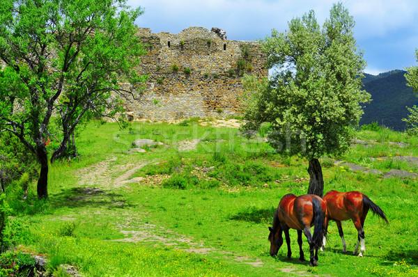 Stock photo: horses grazing in Boltana Castle, in Huesca, Spain