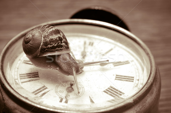 land snail and clock, in sepia tone Stock photo © nito