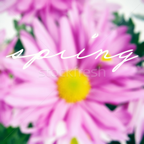flowers and the word spring Stock photo © nito