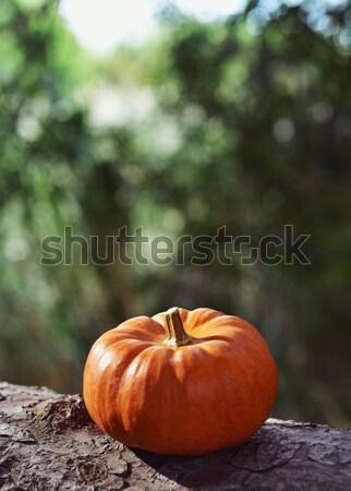 pumpkin on a tree Stock photo © nito