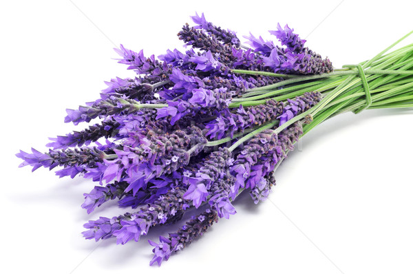 lavender flowers Stock photo © nito
