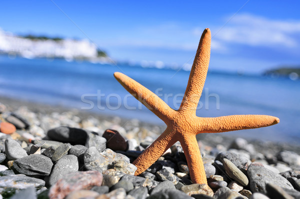 seastar in the seashore Stock photo © nito