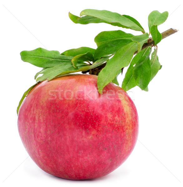 pomegranate fruit Stock photo © nito