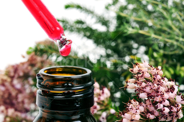 dropper with flower essence and a plant of rosemary Stock photo © nito