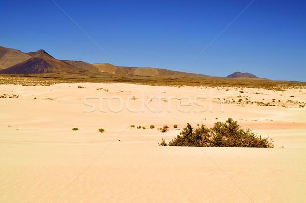 природного парка Испания мнение Канарские острова гор Сток-фото © nito