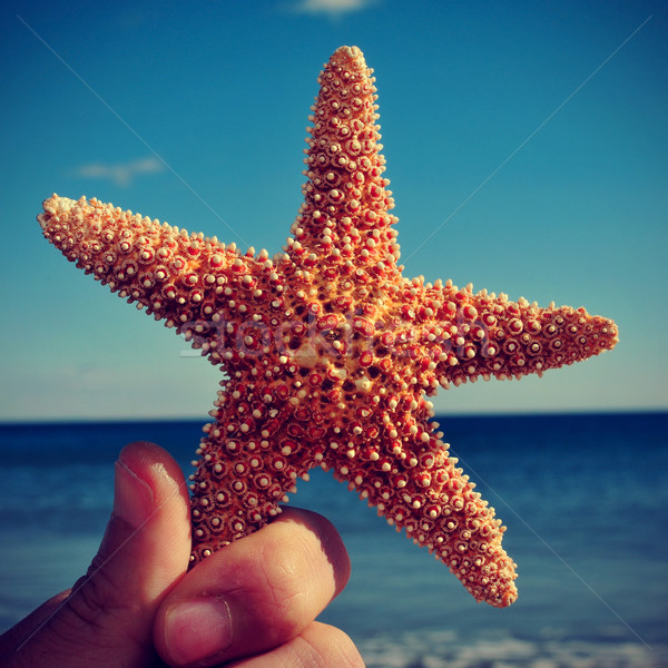 starfish on the beach, with a retro effect Stock photo © nito
