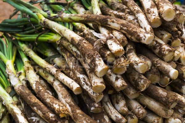 Tatlı soğan tipik İspanya Stok fotoğraf © nito