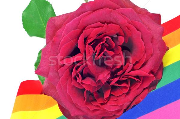 Homo steeg Rood rose regenboog vlag liefde Stockfoto © nito