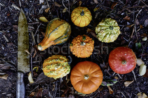knife and pumpkins in the backyard Stock photo © nito