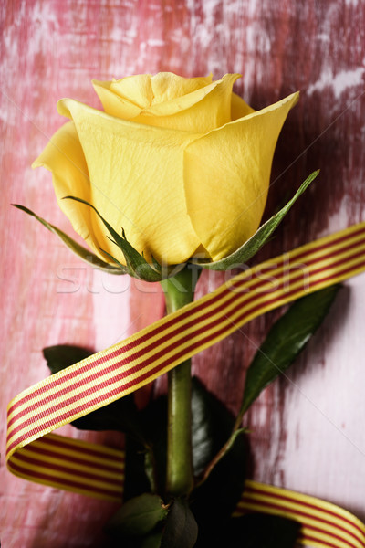 yellow rose and catalan flag Stock photo © nito