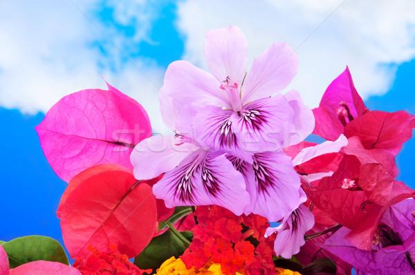 spring flowers Stock photo © nito