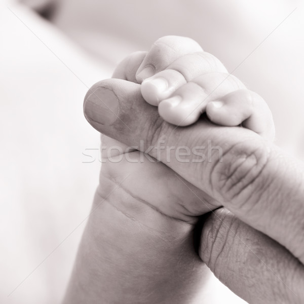 baby gripping the finger of an adult, in black and white Stock photo © nito