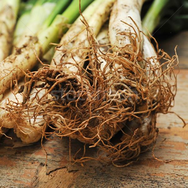 calcots, catalan sweet onions Stock photo © nito