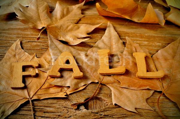 fall Stock photo © nito