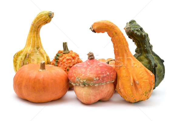 different pumpkins on a white background Stock photo © nito