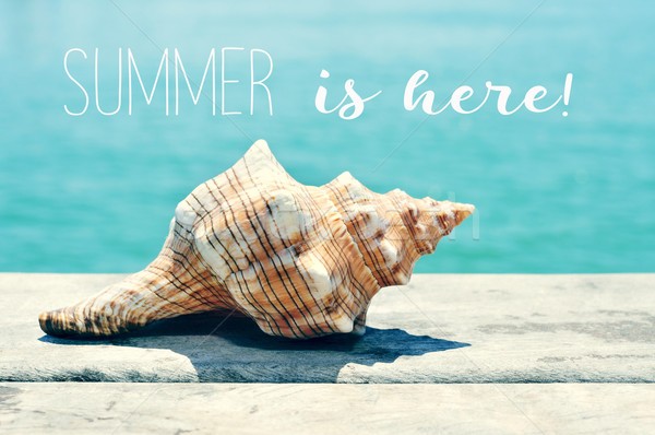 conch on a pier and text summer is here Stock photo © nito