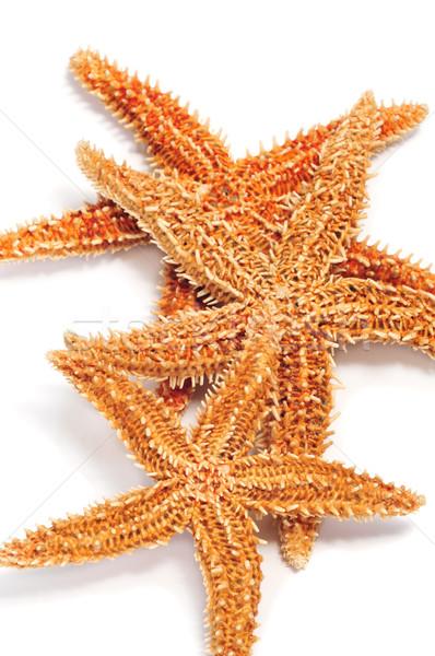 starfishes Stock photo © nito
