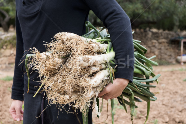 man with calcots, onions typical of Catalonia Stock photo © nito