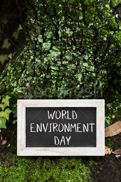 chalkboard with the text world environment day Stock photo © nito
