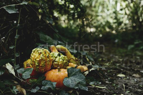Abóboras quintal mata diferente hera Foto stock © nito