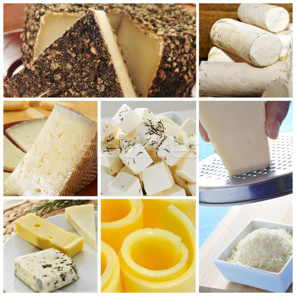 cheese collage Stock photo © nito