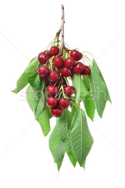 チェリー 白 ツリー フルーツ 背景 ストックフォト © nito