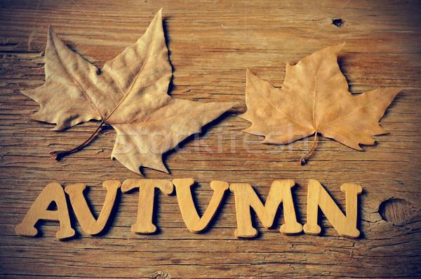autumn Stock photo © nito