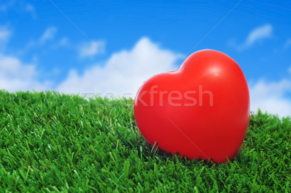 heart on the grass Stock photo © nito