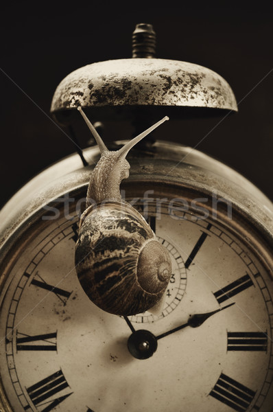 land snail and alarm clock Stock photo © nito