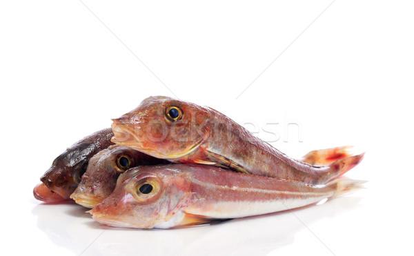 surmullets fishes Stock photo © nito
