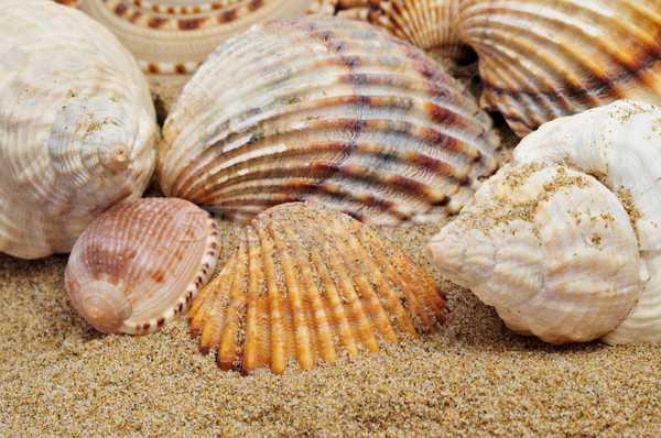 seashells on the sand Stock photo © nito