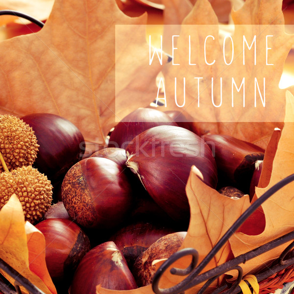 chestnuts, dried leaves and the text welcome autumn Stock photo © nito