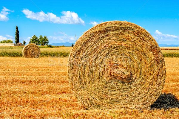 Termény mező Spanyolország szalmaszál aratás nagy Stock fotó © nito