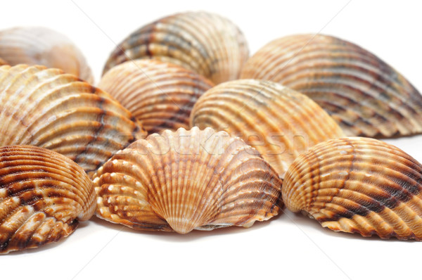 seashells Stock photo © nito