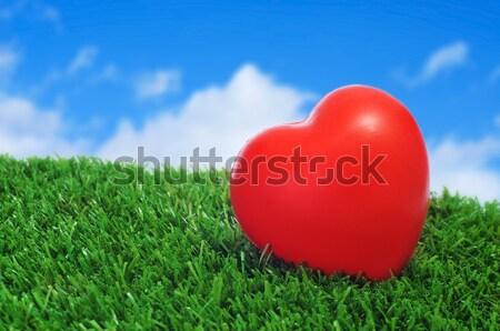 Hart gras Rood liefde tuin teken Stockfoto © nito