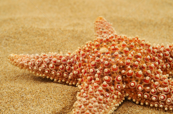 starfish on the sand of a beach Stock photo © nito